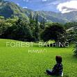 Forest Bathing Hawaii