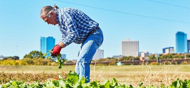 urrban-agriculture